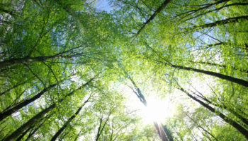 41762840 – green trees background in forest