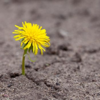 sprout-makes-the-way-through-sand_1398-96